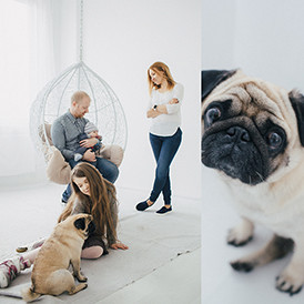 friendly_family_&_pug_274_274